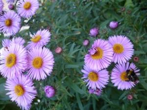 Gartenbauverein Stammham, OGV Stammham, Garten- und Landschaftspflege Stammham